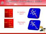 amino cidos dicarbox licos y amidas