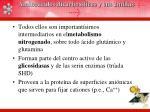 amino cidos dicarbox licos y sus amidas