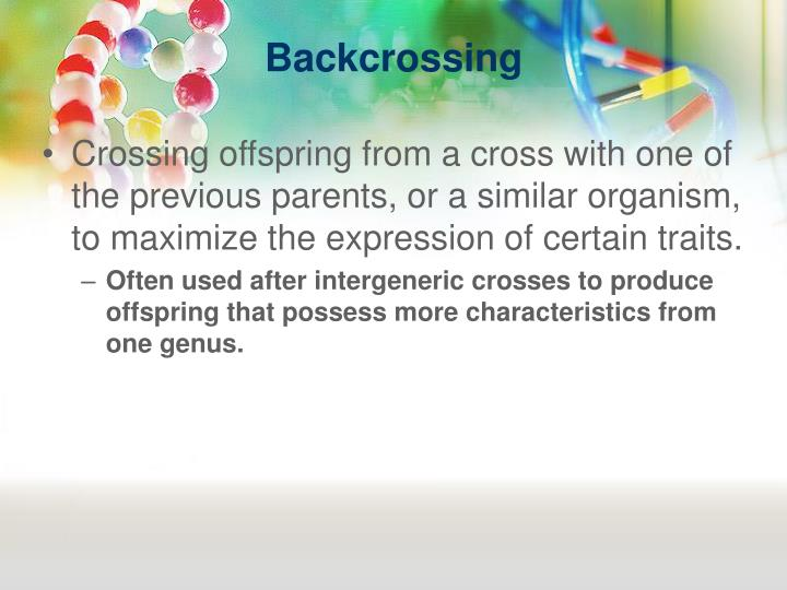 Backcrossing