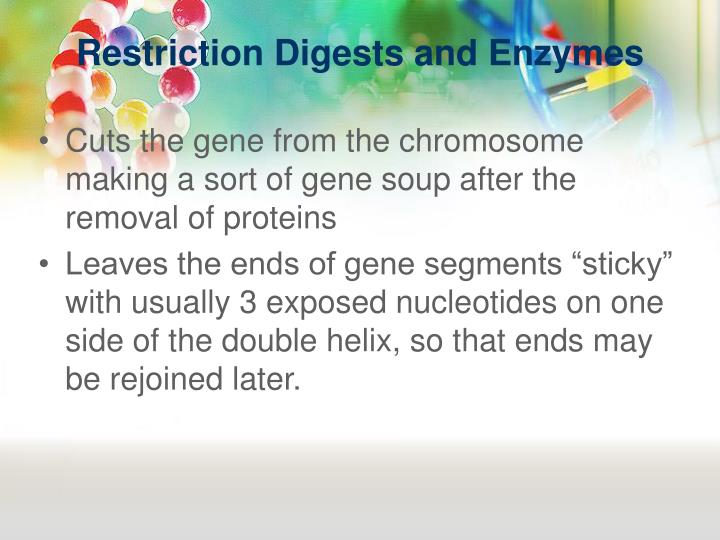 Restriction Digests and Enzymes