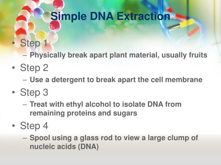 Simple DNA Extraction