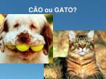 c o ou gato