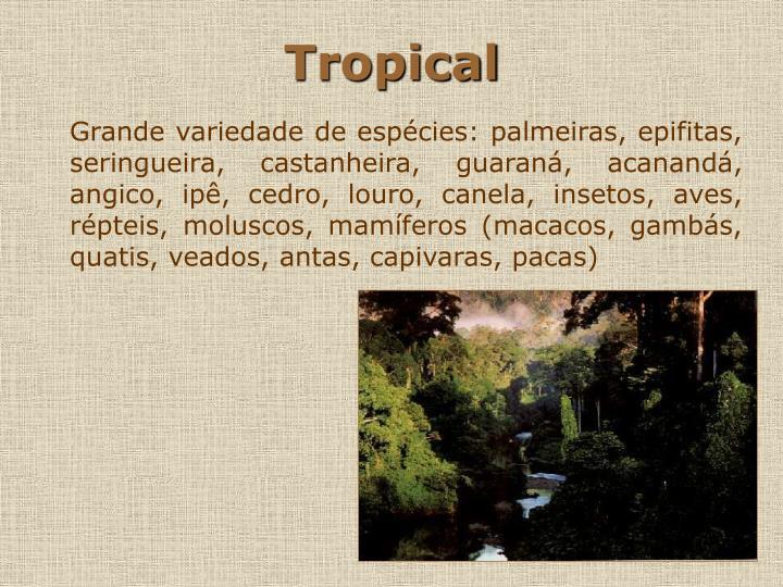 Tropical3