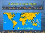 a world of coral reefs