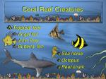 coral reef creatures14