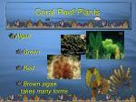 coral reef plants8