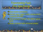 fascinating fact the sea horse