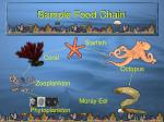 sample food chain
