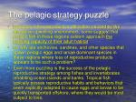 the pelagic strategy puzzle