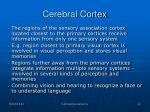 cerebral cortex13