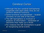cerebral cortex4