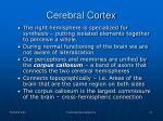 cerebral cortex5