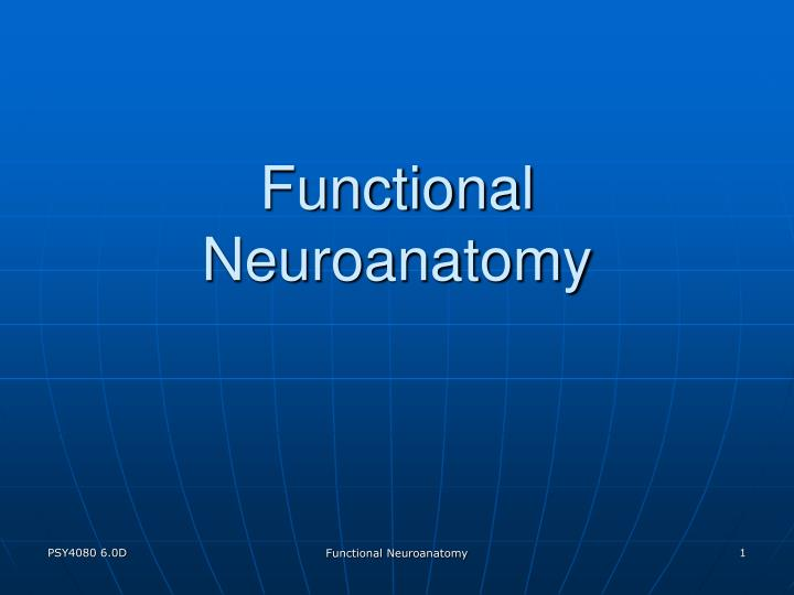functional neuroanatomy n.