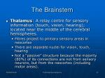 the brainstem2