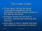 the limbic cortex