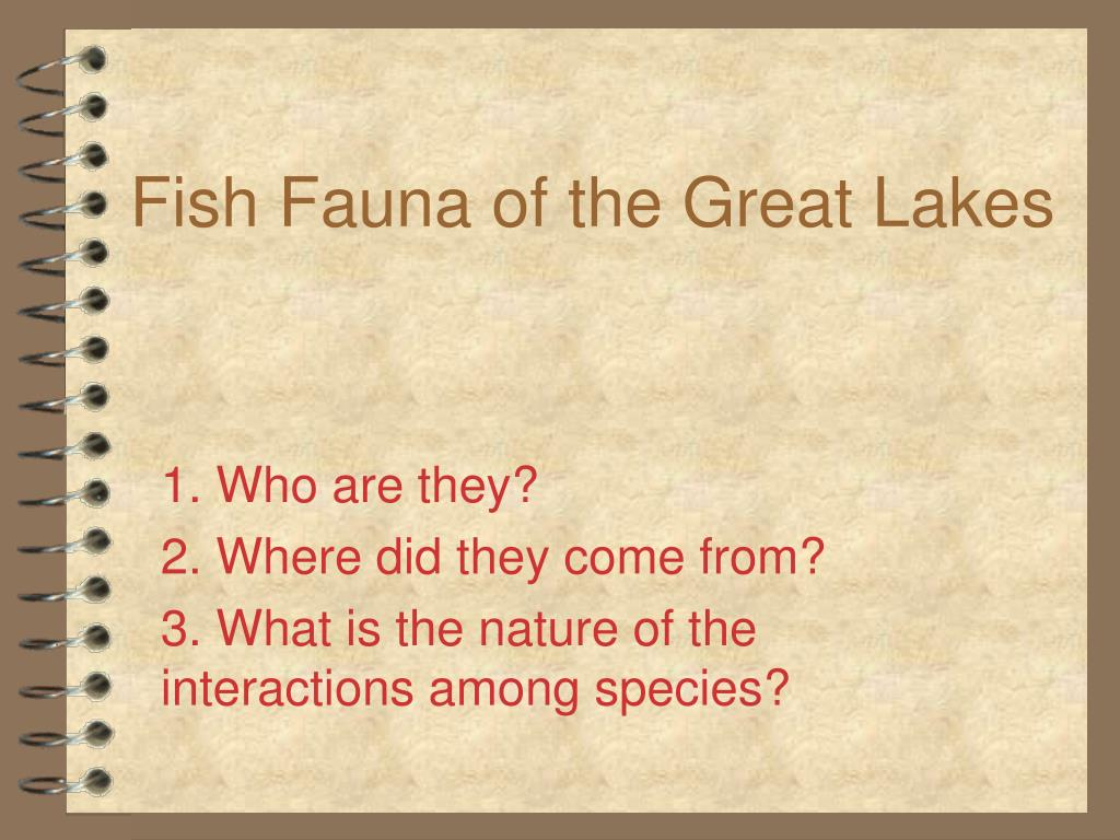 fish fauna of the great lakes l.