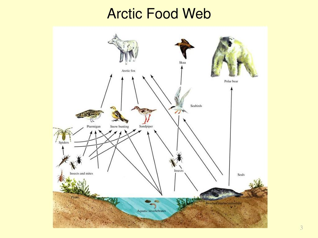 Arctic Food Web
