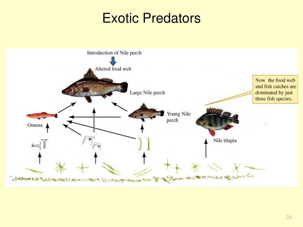 Exotic Predators