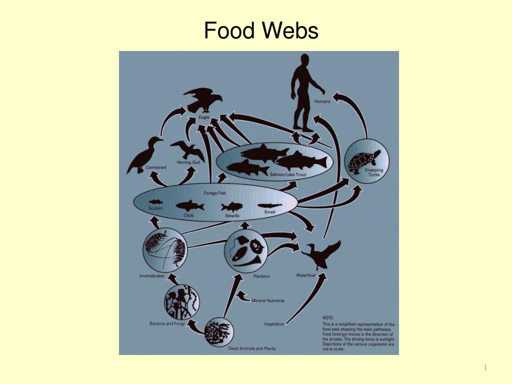 food webs l.