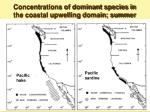 concentrations of dominant species in the coastal upwelling domain summer