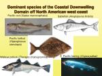 dominant species of the coastal downwelling domain off north american west coast