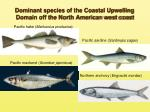 dominant species of the coastal upwelling domain off the north american west coast