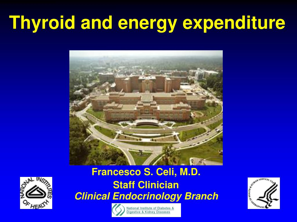 thyroid and energy expenditure l.