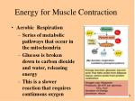 energy for muscle contraction56