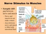 nerve stimulus to muscles43