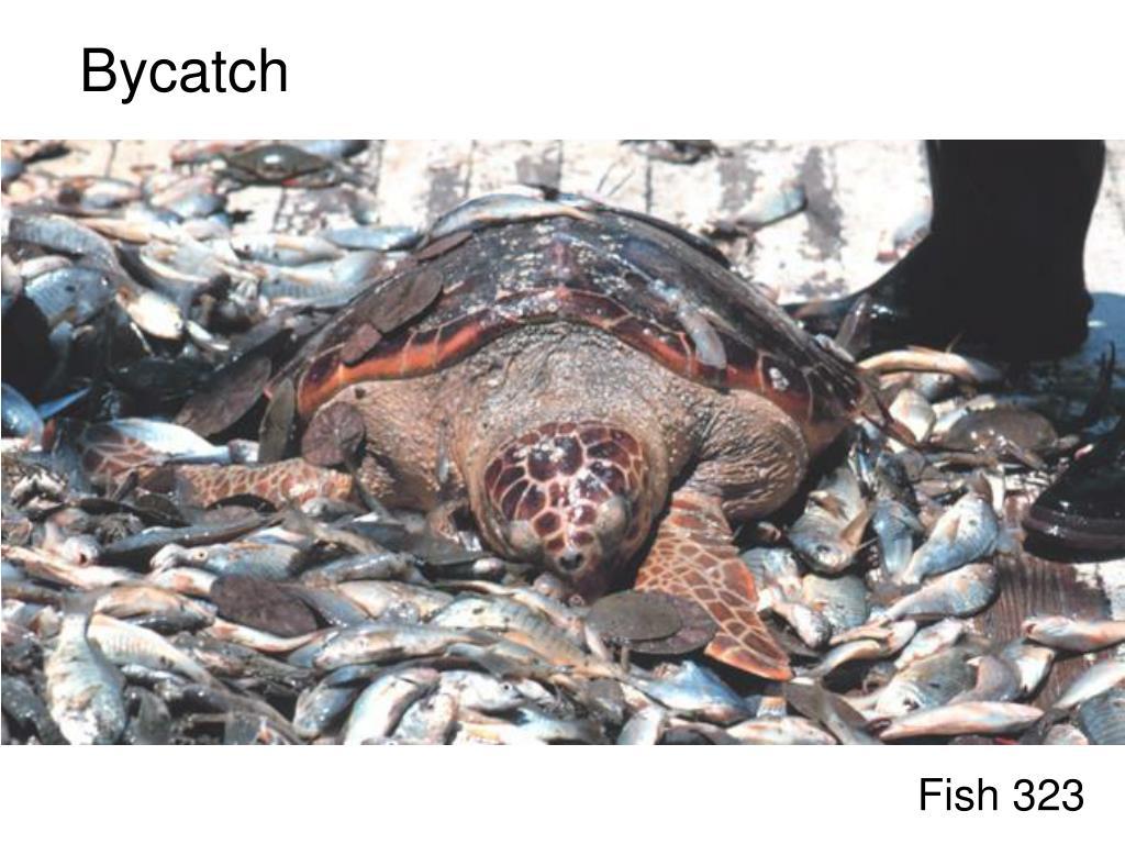 bycatch l.