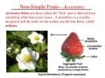 non simple fruits accessory