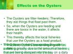 effects on the oysters