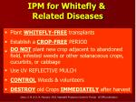 ipm for whitefly related diseases