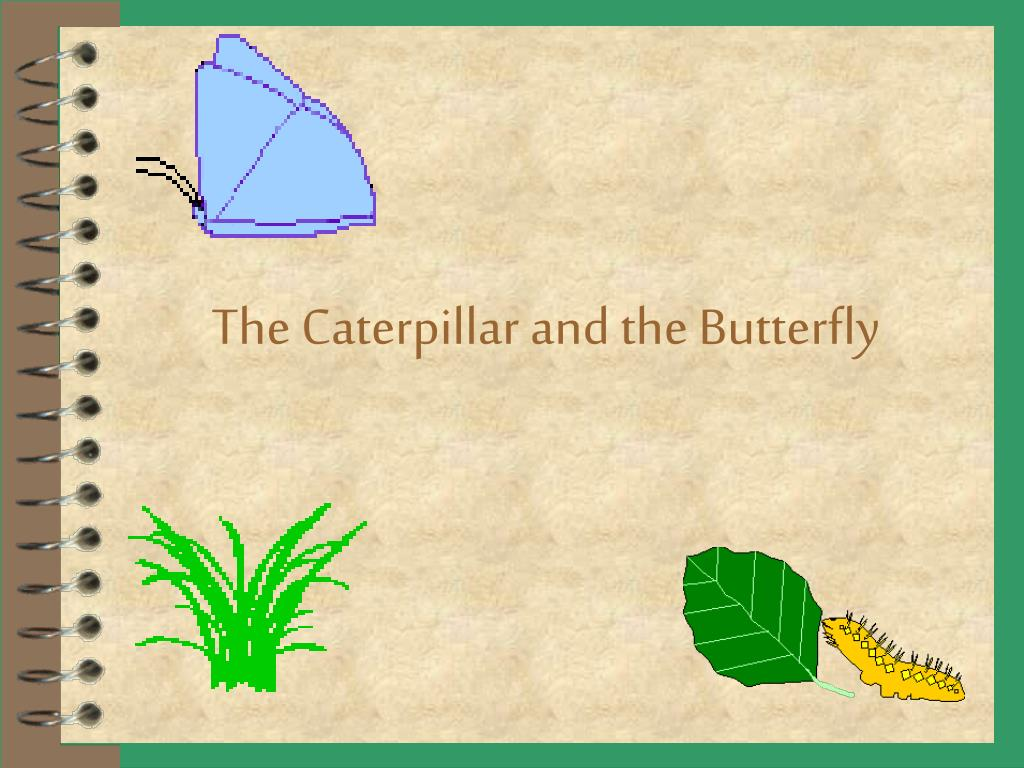 the caterpillar and the butterfly l.