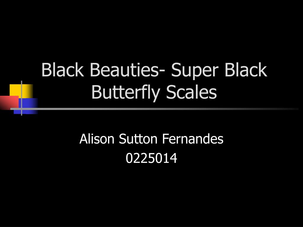 black beauties super black butterfly scales l.