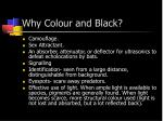 why colour and black