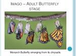 imago adult butterfly stage