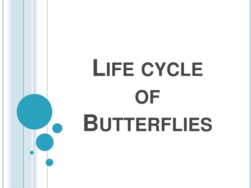 life cycle of butterflies l.