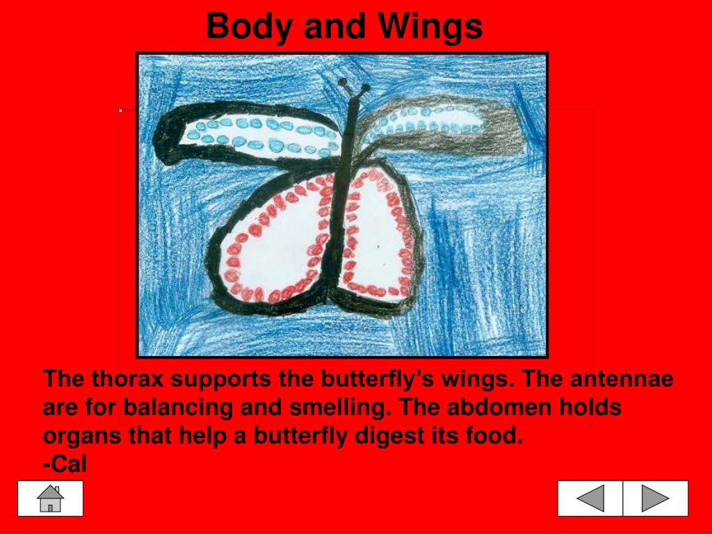 Body and Wings