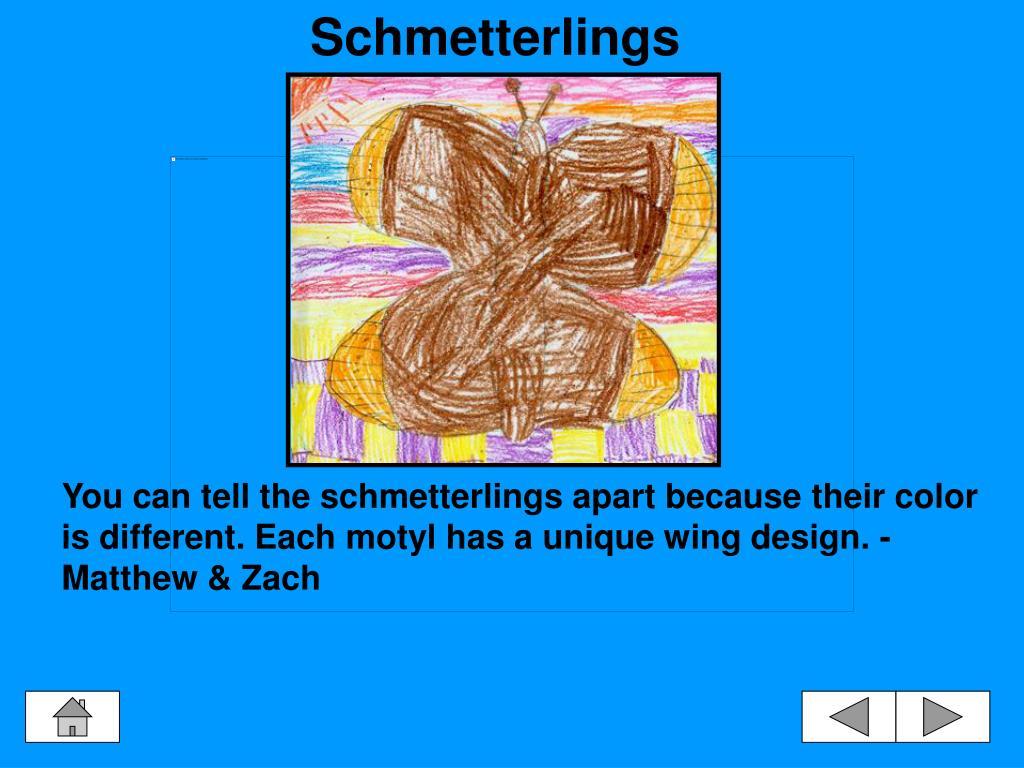 Schmetterlings