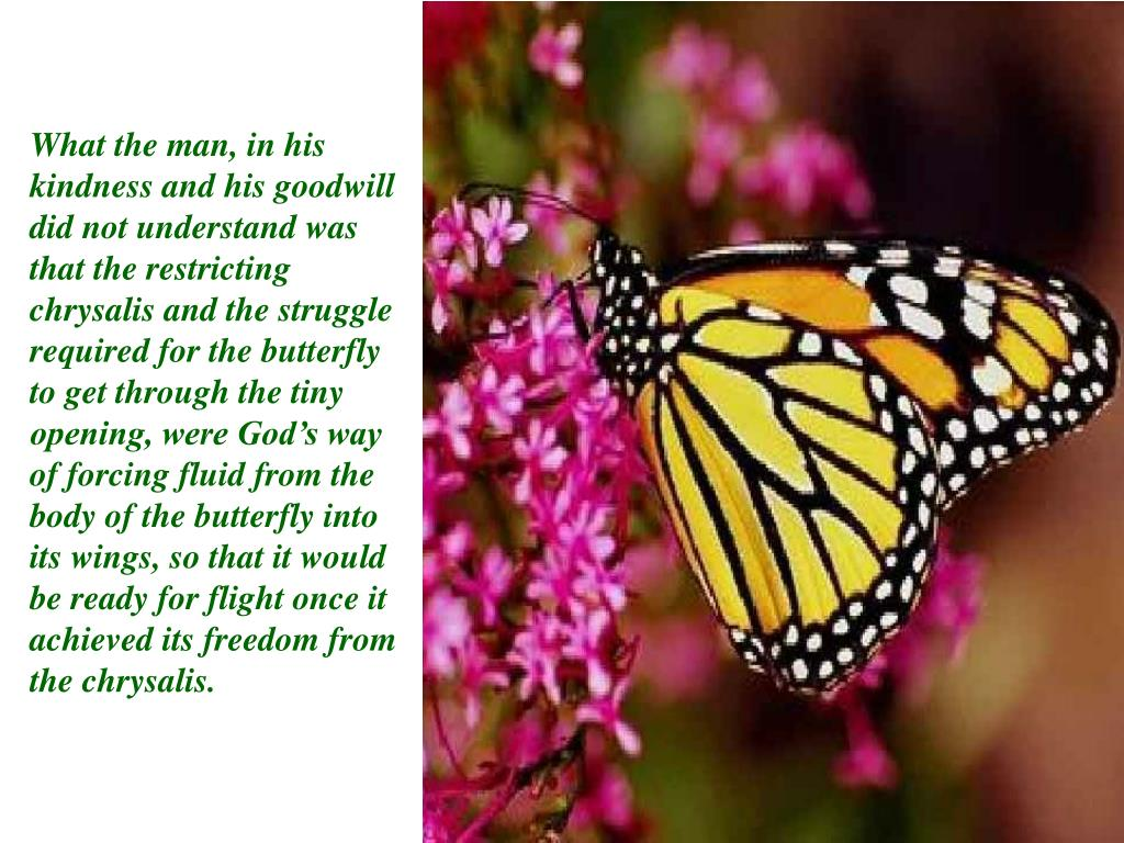 What the man, in his kindness and his goodwill did not understand was that the restricting chrysalis and the struggle required for the butterfly to get through the tiny opening, were God's way of forcing fluid from the body of the butterfly into its wings, so that it would be ready for flight once it achieved its freedom from the chrysalis.
