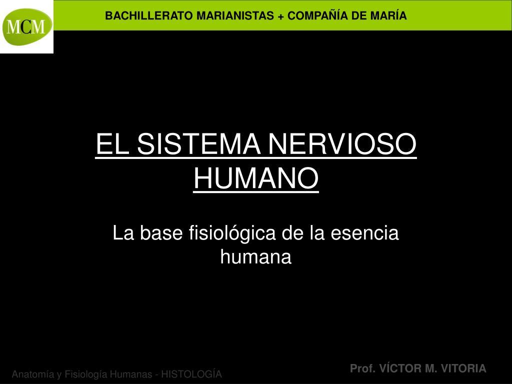 el sistema nervioso humano l.