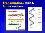transcription mrna forms codons