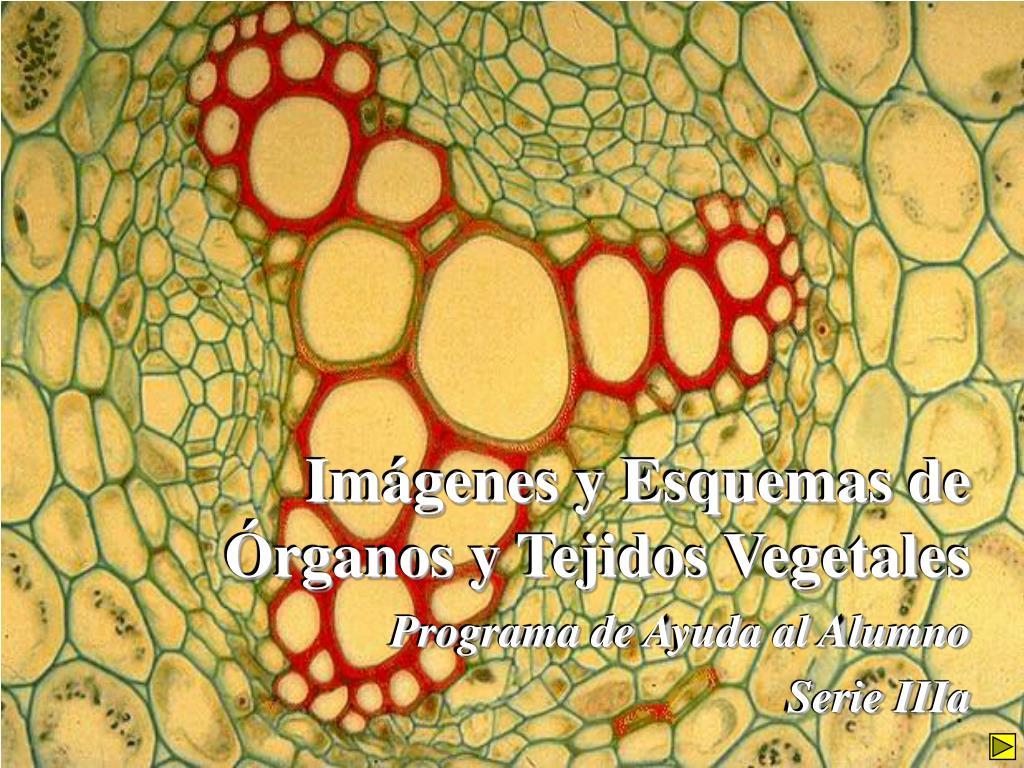 im genes y esquemas de rganos y tejidos vegetales l.