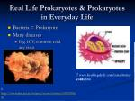 real life prokaryotes prokaryotes in everyday life