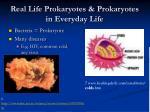 real life prokaryotes prokaryotes in everyday life