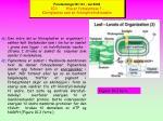 forelesninger bi 101 v r 2003 10 1 hva er fotosyntese kloroplasten som en fotosyntetisk maskin6
