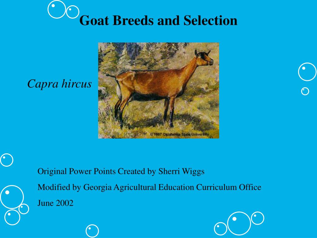 goat breeds and selection l.