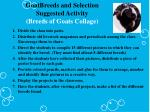 goatbreeds and selection suggested activity breeds of goats collage