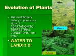 evolution of plants3
